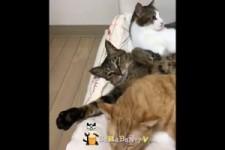 Katzen schlafen nicht gern allein