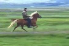 Pferd hat Power
