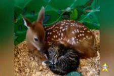 aussergewöhnliche Tierfreundschaften