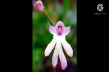 Die Welt der Blumen - kuriose Formen und vielen Farben