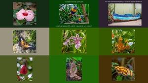 Orchideen en Vlindertuin Luttelgeest 2019 deel 2 -