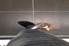 Kätzchen klettert einfach kurz hoch