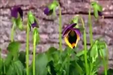 wenn Blumen tanzen und die Natur erwacht
