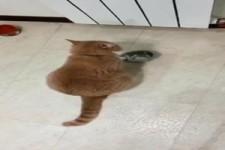 Katze macht lautstark auf sich aufmerksam