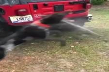 Hund fängt Wasserstrahl