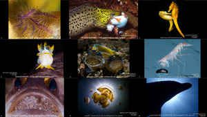 The 2015 Ocean Art Underwater Photo Competition