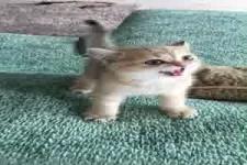 Gefährliches Kätzchen