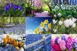 Spring-2.ppsx auf www.funpot.net