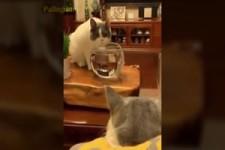 mit Katzen wird's nie langweilig