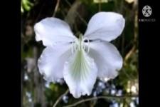 Blumen die fast wie Schmetterlinge aussehen