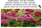 Fremde-Blumen.pps auf www.funpot.net
