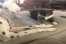 Katze und Hund kämpfen ums Sofa