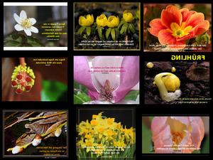 Frühlingsbilder und Sprüche 2