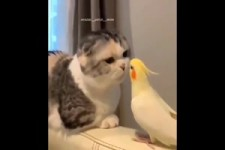 Lustige Vögel und andere Haustiere