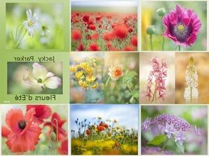Jacky Parker - Fleurs d'été - Sommerblumen ...nicht blättern