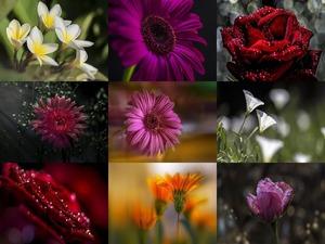 Les fleurs - Nasser Osman - Blumen ... nicht blättern