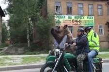 Mit dem Bären auf Tour
