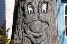 die kuriosesten Bäume der Welt