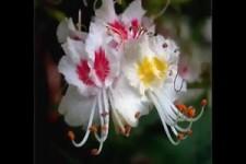 ungewöhnliche schöne Blumen Formen
