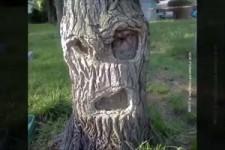 Lustig-kuriose Bäume