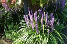 De Tuinen van Appeltern deel 1 - Die Gärten der Appeltern 1