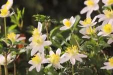 Flowers Can Dance - Blumen können tanzen