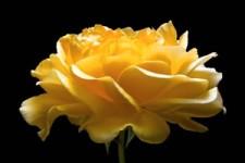Fleurs 48 - Blumen 48