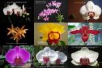 Orchideen-und-Gedanken.pps auf www.funpot.net
