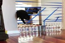 Immer mehr Herausforderung für die Katze