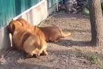 Was-machen-die-Hunde-da-nur?.mp4 auf www.funpot.net