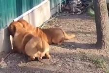 Was machen die Hunde da nur?