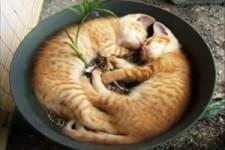 Wo Katzen gerne schlafen