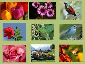 Flore et Faune 2 - Flora und Fauna 2