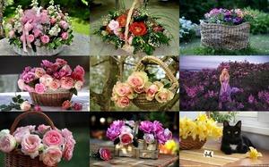 Flower Baskets 1 - Blumenkörbe 1