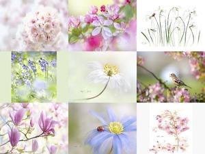 Jacky Parker - Fleurs d'été - Blumen im Sommer