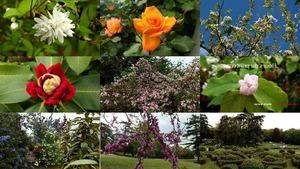 Fleurs du printemps - Frühlingsblumen