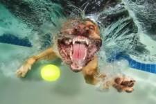 Hunde unter Wasser - Schnappschüsse