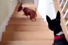 wie Hunde die Treppe bewältigen
