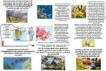 Blütenpracht-genießen.pps auf www.funpot.net
