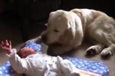Hunde sind die besten Babysitter