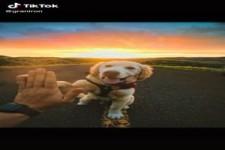 Cute dogs - TikTok - Süße Hunde