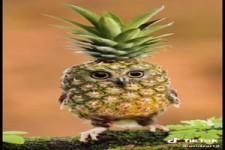 Lustige Früchte
