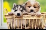 tierische-Schnappschüsse.mp4 auf www.funpot.net