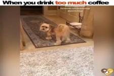 Wenn du zu viel Kaffee getrunken hast