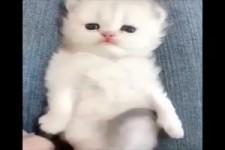 Katzen-Kitten , einfach nur süß