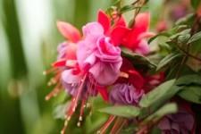 Fleurs 54 - Blumen 54