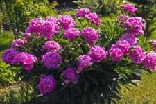 Le Joli Printemps - Der schöne Frühling