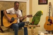 ein Papagei mit Freude am singen