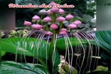 Wunder der Natur