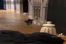 Lustiger Hund